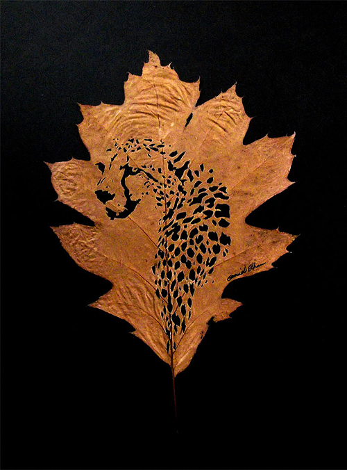 leaf-cutting-omid-asadi-4